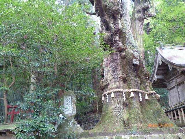 堂々とそびえ立つ樹木画像